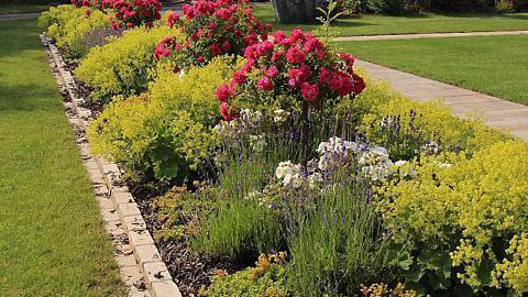 Rosenbegleitpflanzen